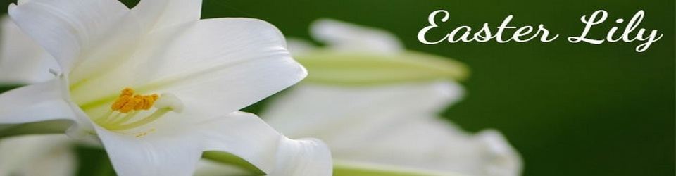 easter_lily_banner